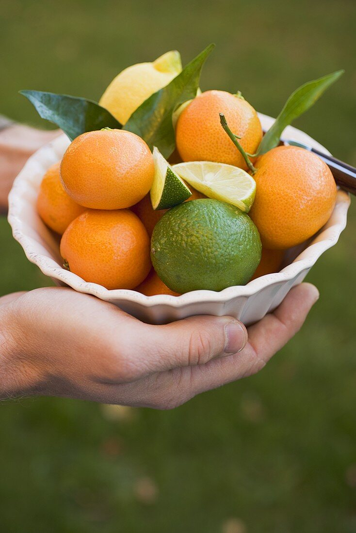 Hands holding a dish of citrus fruit
