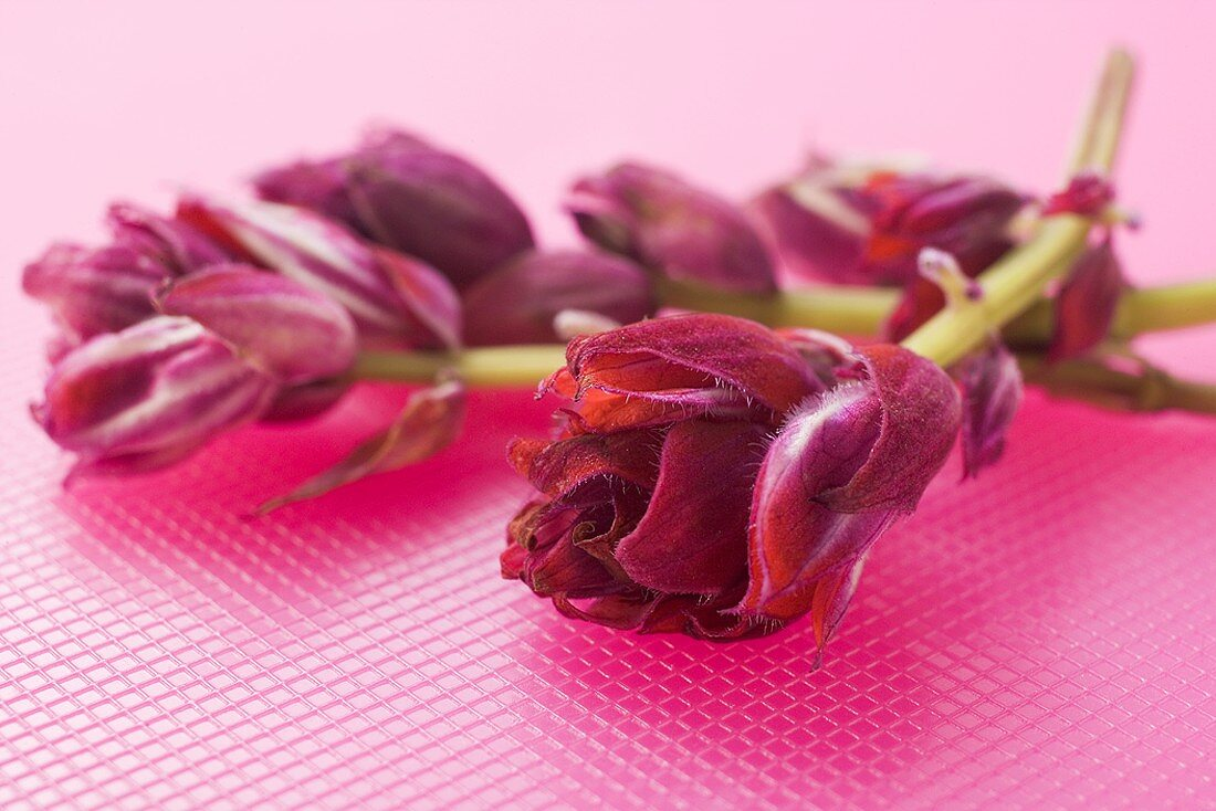 Red sage flowers on pink background