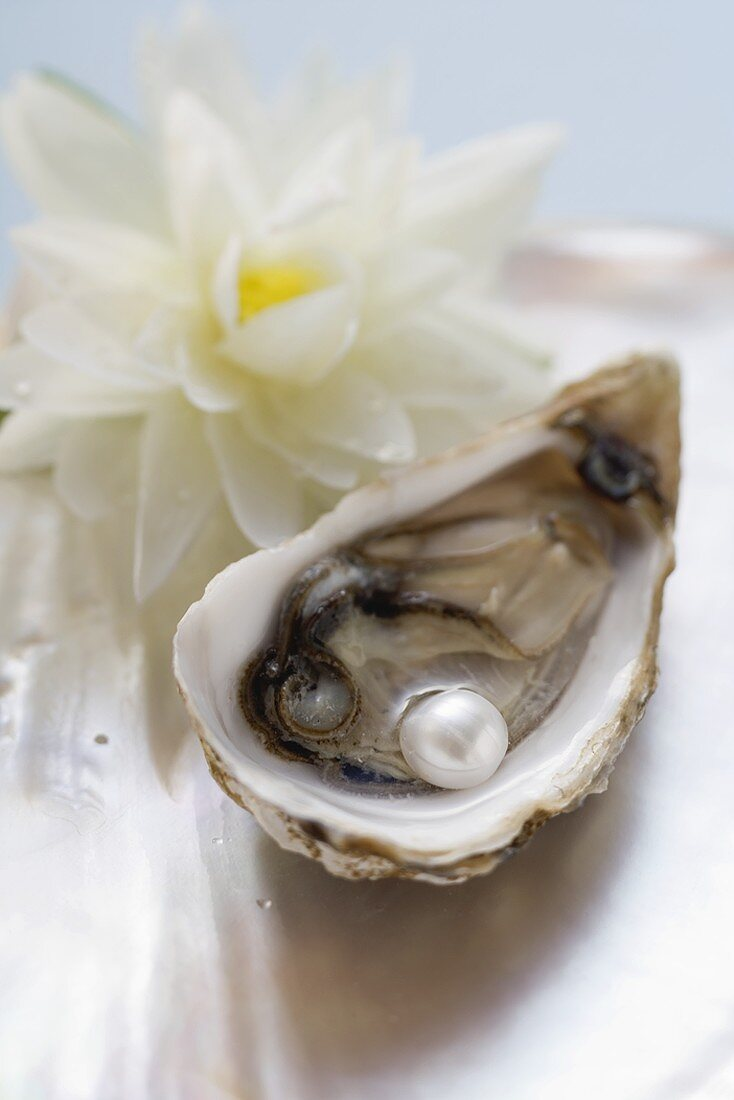 Fresh oyster with pearl, white water lily behind