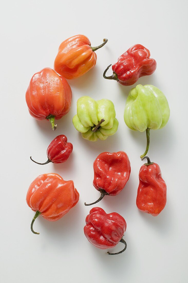 Different coloured Habanero chillies