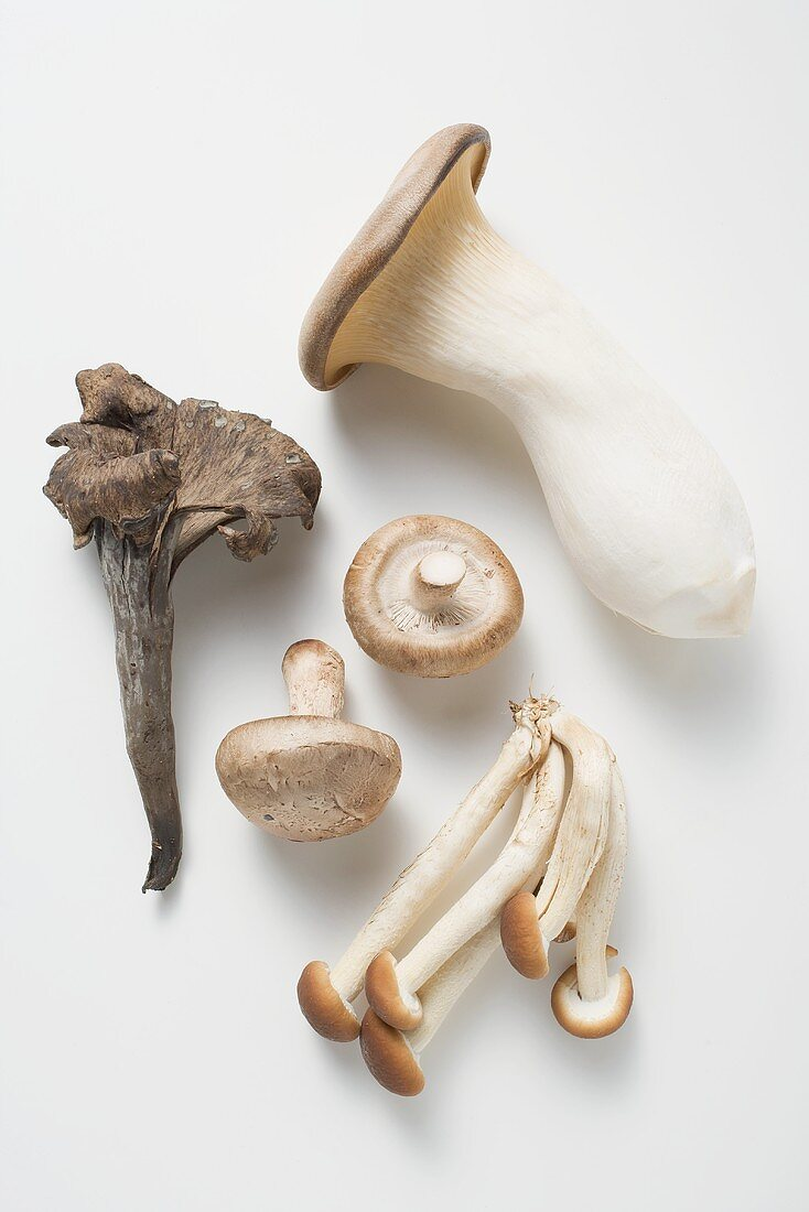 Black chanterelle, shiitake, pioppini & king oyster mushroom