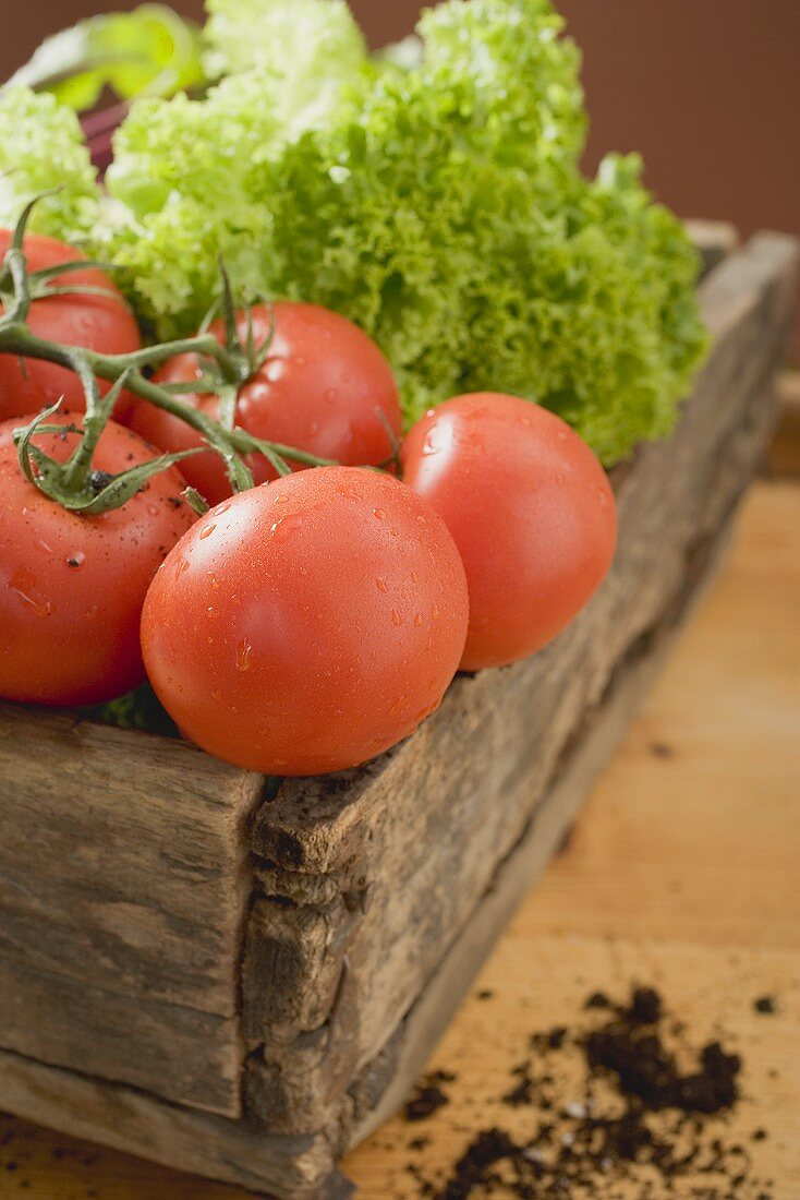 Fresh tomatoes and lettuce in wooden box