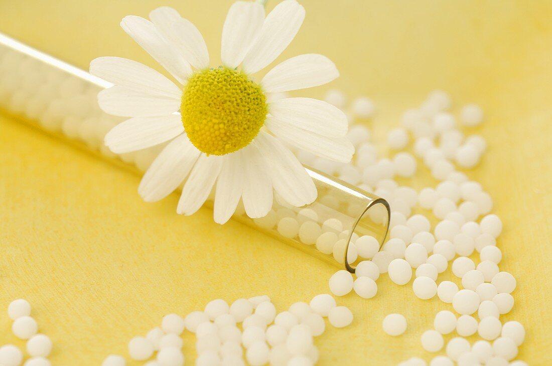 Chamomile flower with homeopathic remedy (globuli)