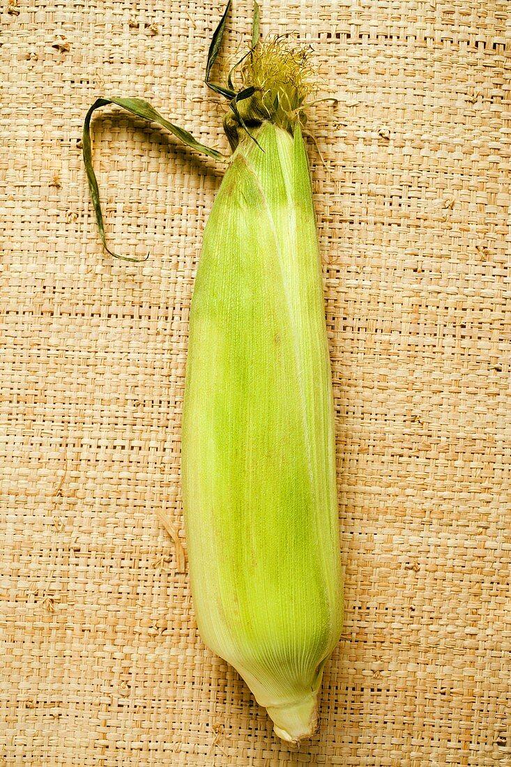 A corn cob with husks