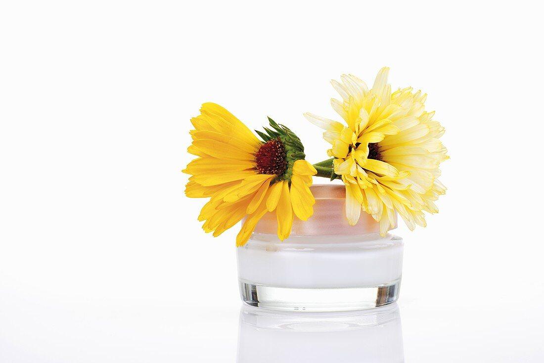 Marigolds and marigold cream, close-up