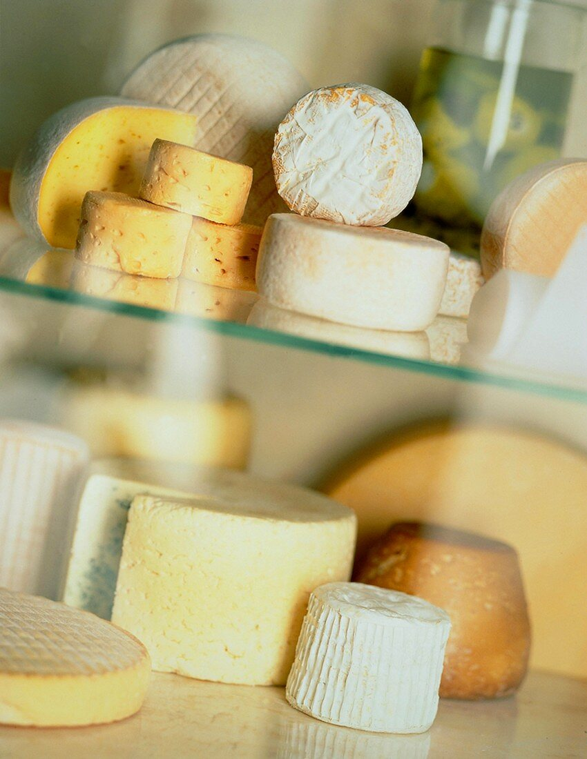 Various kinds of cheese on sheets of glass