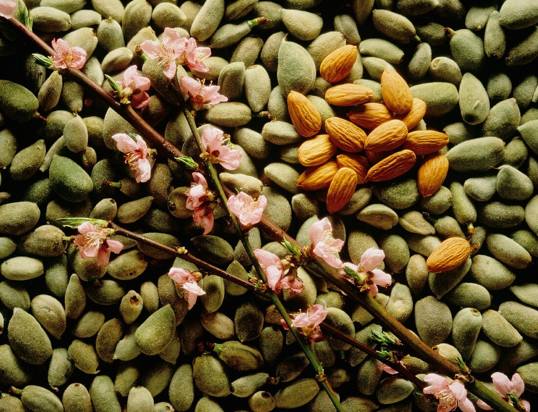 Green Almonds; Roasted Almonds; Almond Branch