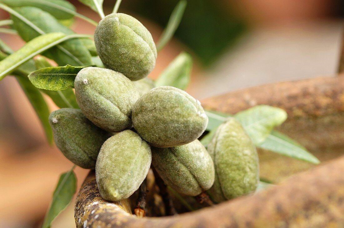 Fresh almonds, close-up