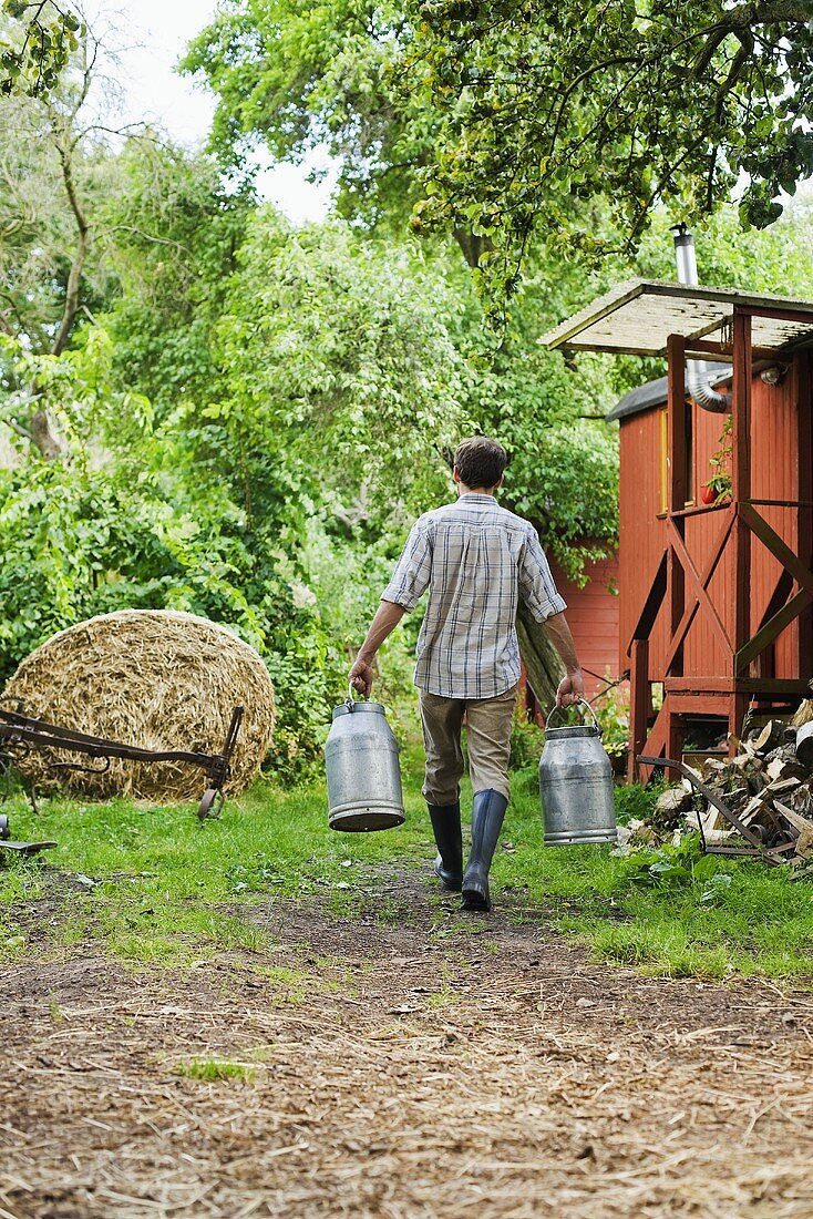 Farmer carrying milk cans, rear view