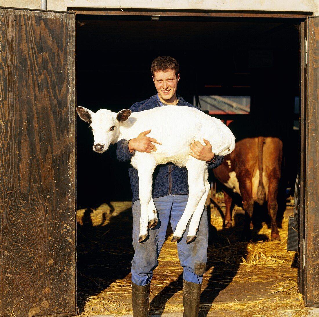 Farmer carrying a calf