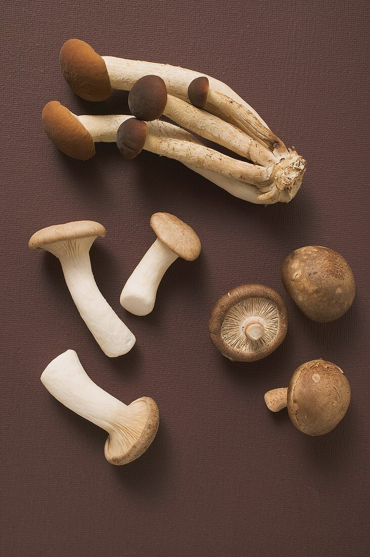King oyster mushrooms, pioppini and shiitake mushrooms