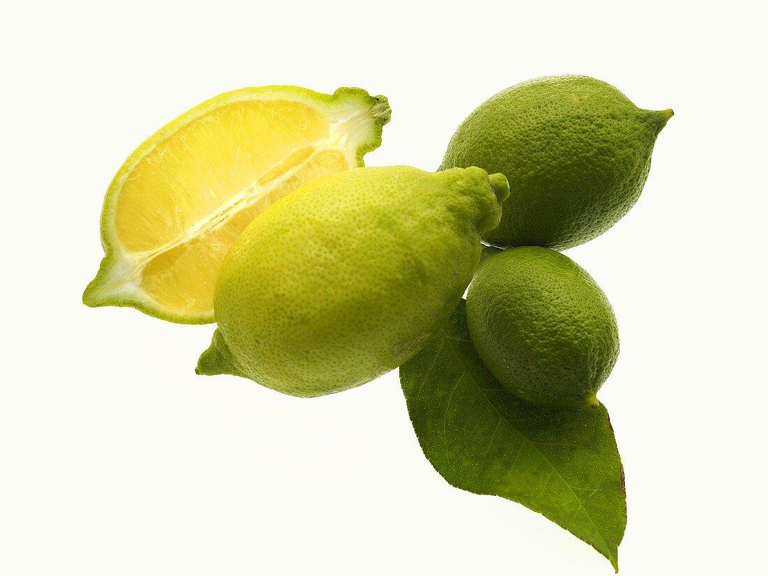 Unripe lemons with leaf
