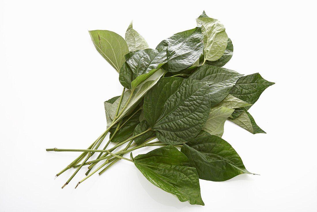 Cha plu leaves