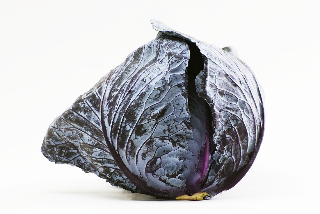 Whole Head of Red Cabbage on White