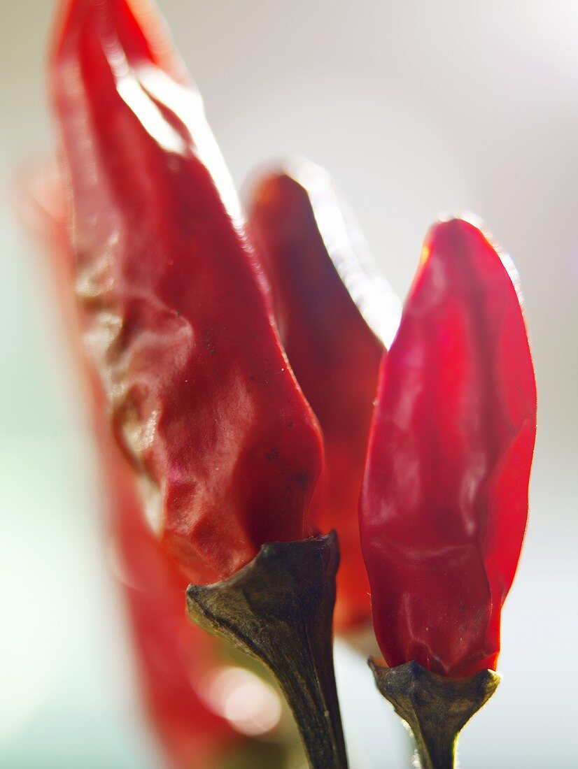 Dried red chillies (close-up)