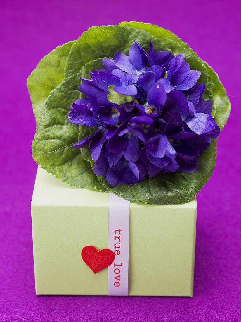 Posy of violets and gift