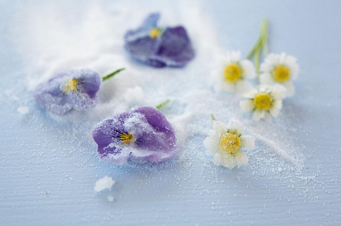 Backen, Kandierte Blüten, lila Veilchen, Kamille