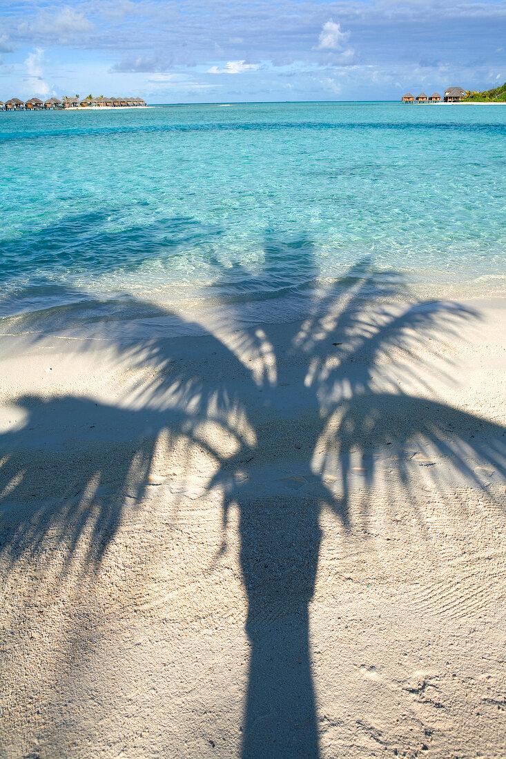 Lagune, Schatten einer Palme, Insel Veligandu Huraa, Malediven