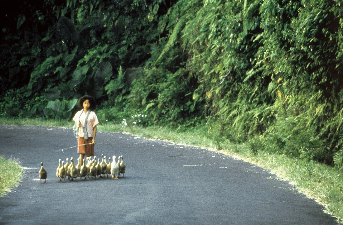 Asian Woman Walking with Ducks and Geese
