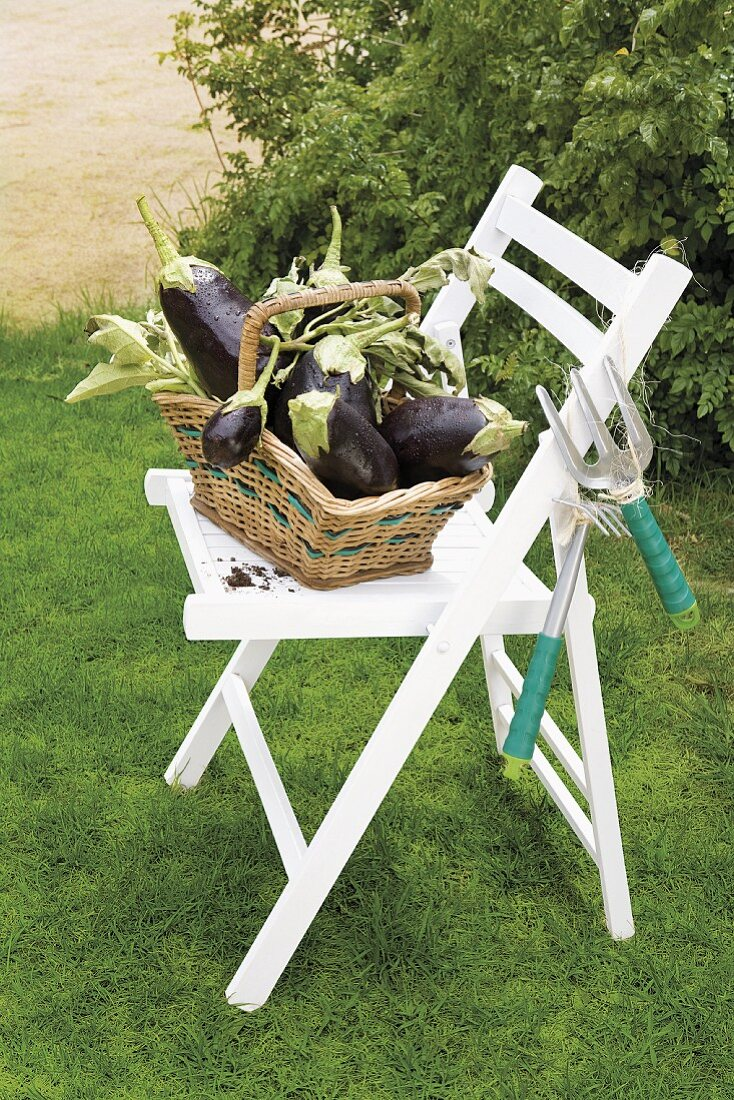 Aubergines in a basket