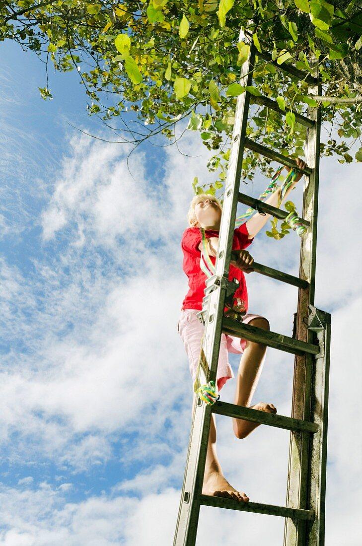 Boy climbing ladder to tree