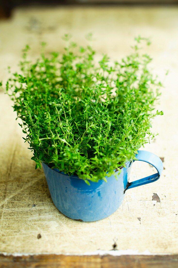 Fresh thyme in an enamel jug