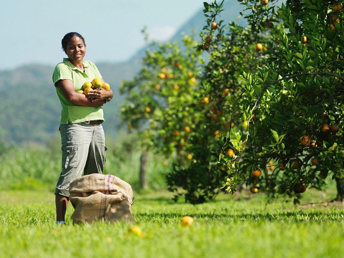 Female Worker Picking Oranges