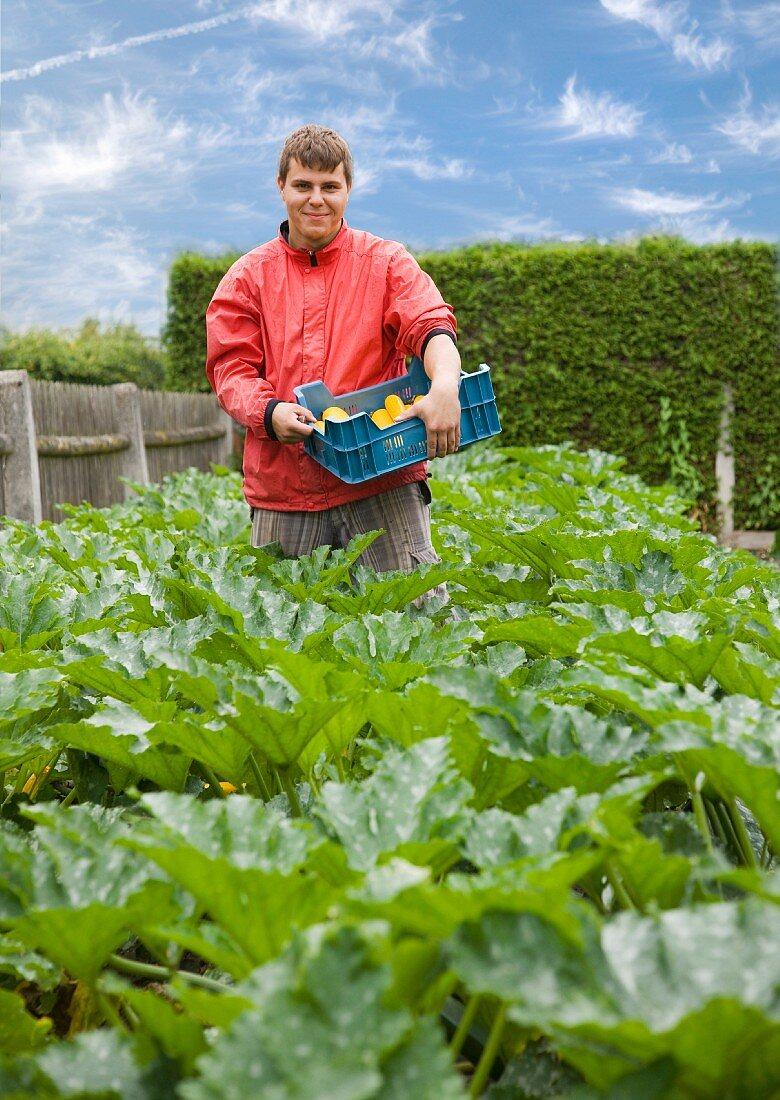 man harvesting yellow zucchini