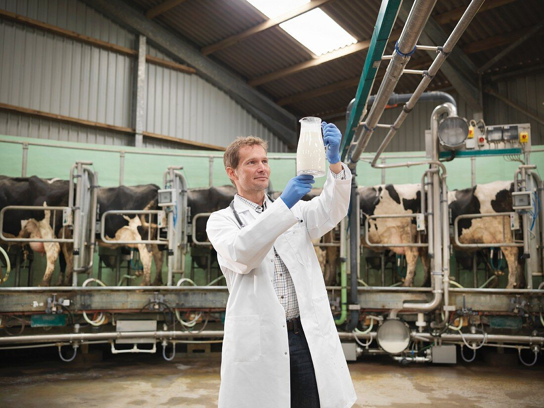 A vet checking the milk production on a dairy farm