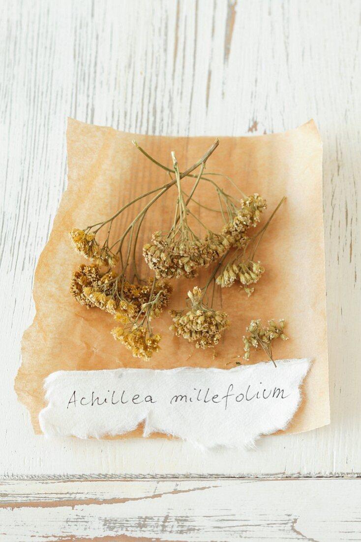 Dried yarrow (Achillea millefolium)
