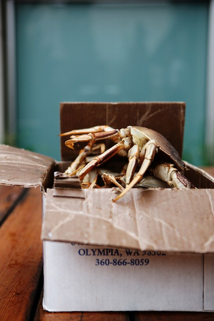 Live Dungeness Crabs Climbing Out of a Box
