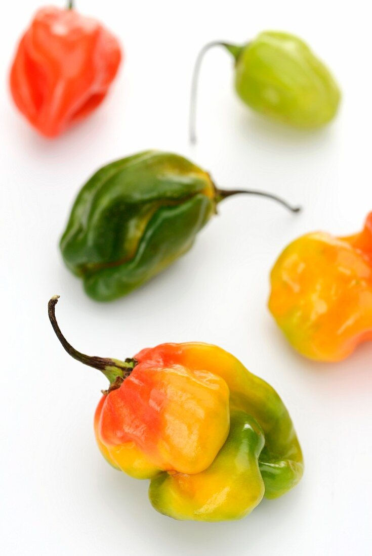 Colourful Habanero peppers