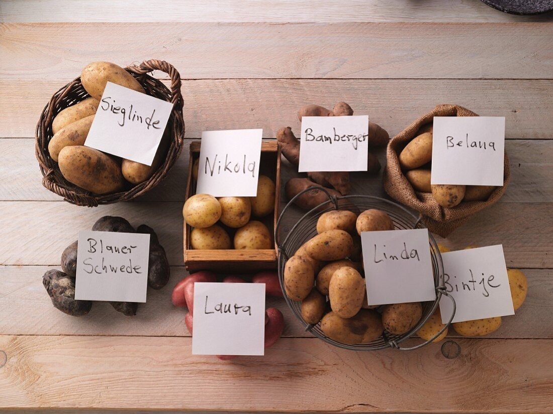 Various types of potatoes with labels