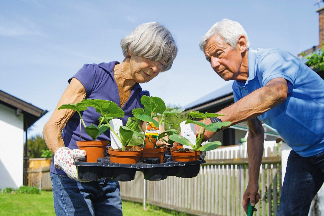 An elderly couple with young plants in the garden