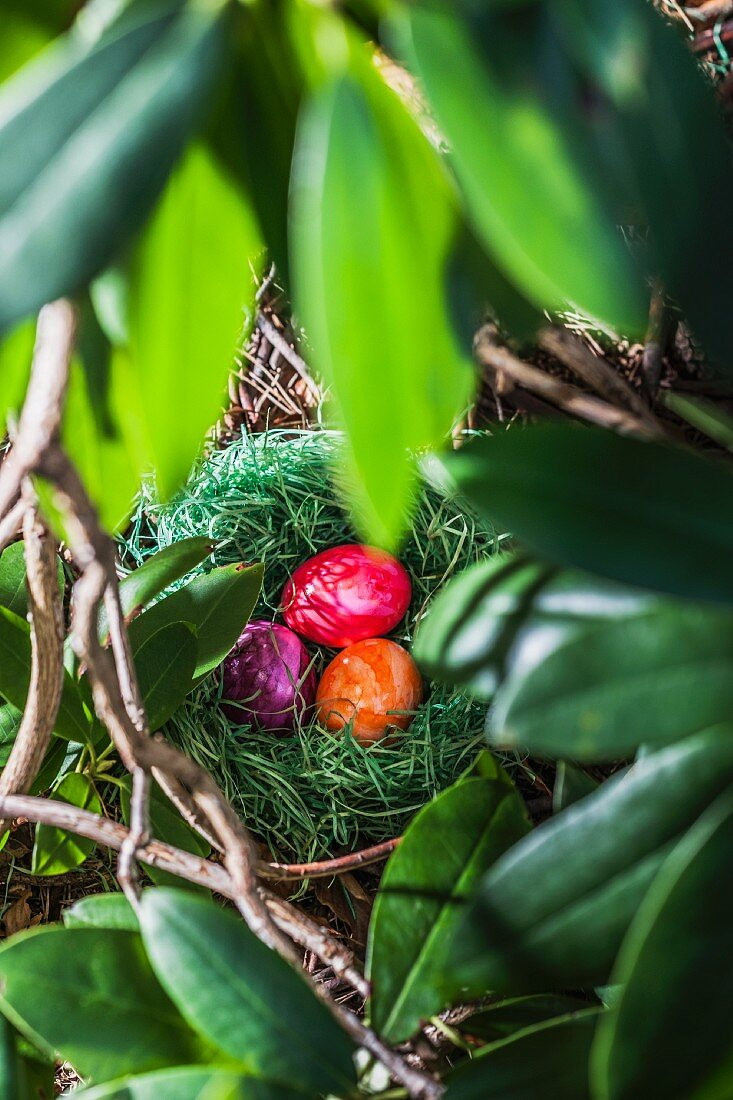 Coloured eggs, for Easter, in a hidden nest in the garden