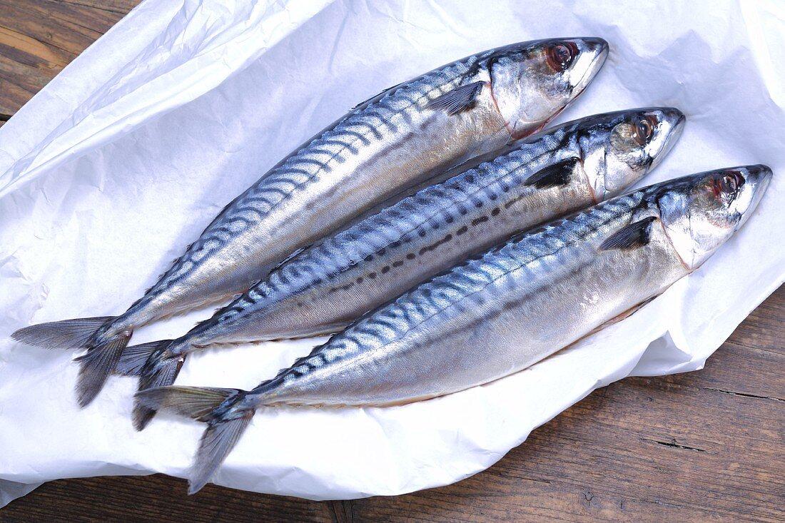 Three fresh mackerel on paper