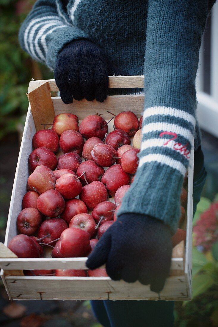 A woman holding a crate of red apples