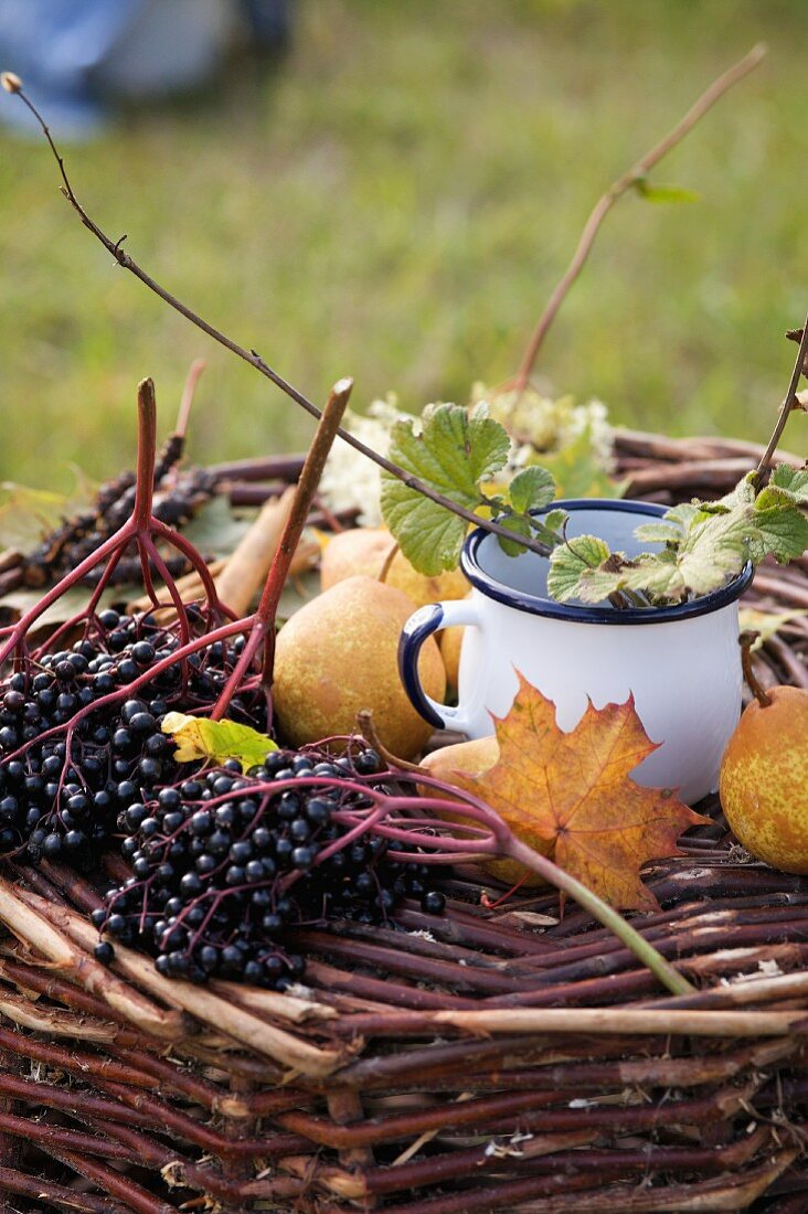 A still life featuring elderberries, pears and a maple leaf