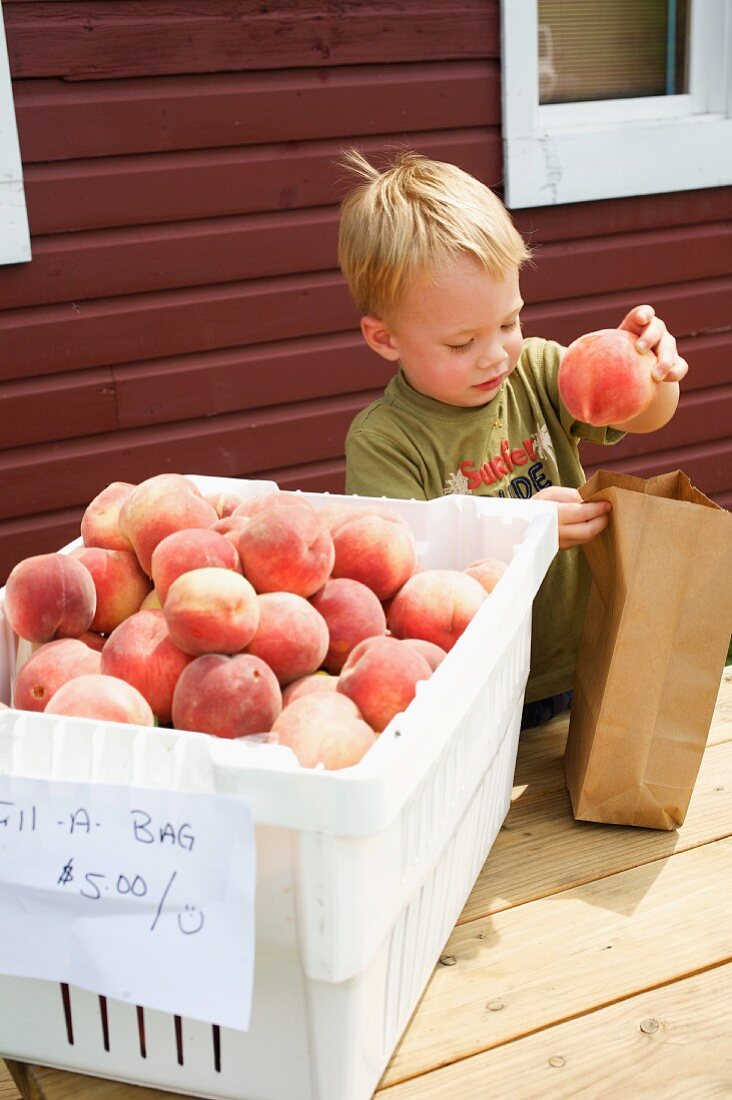 Young Boy Selecting Peaches from a Bin and Placing them into a Paper Bag