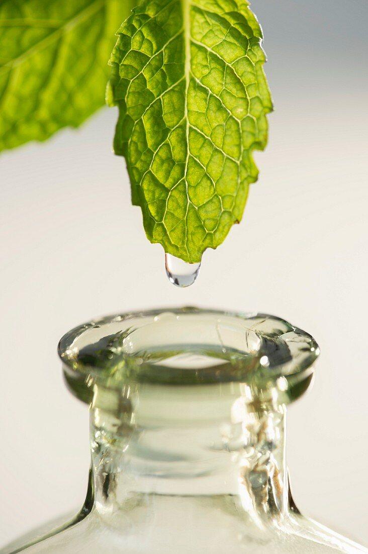Studio shot of liquid falling from leaf into bottle