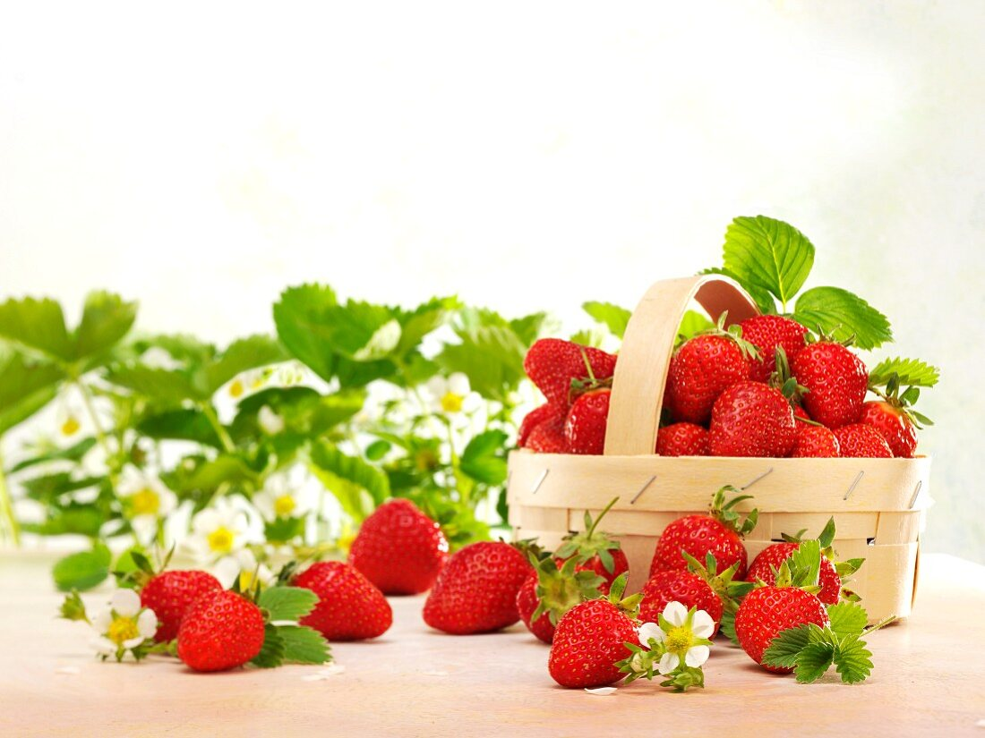 Fresh strawberries with leaves, flowers and a woodchip basket