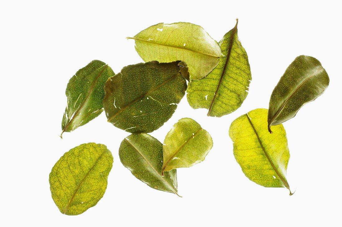 Several kaffir lime leaves