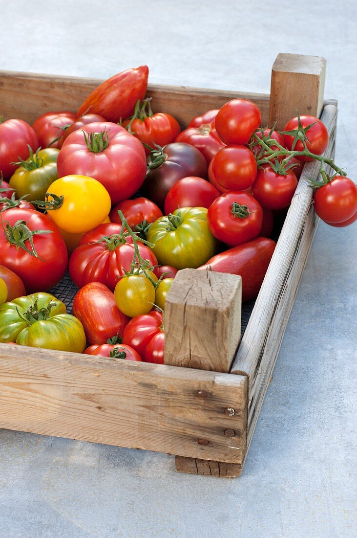 Assorted tomatoes in a crate