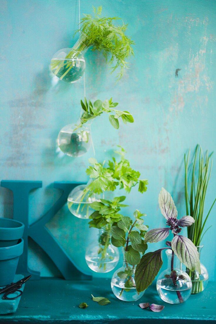 Fresh herbs in small balloon jars