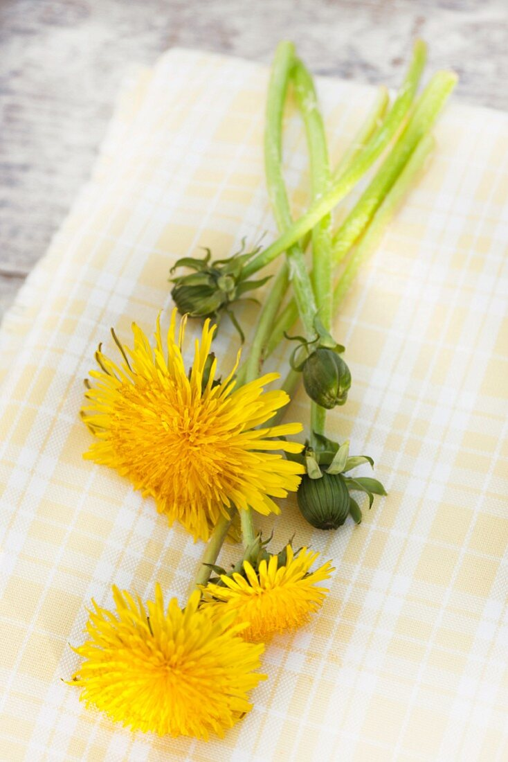 Dandelion flowers and flower buds on yellow cloth on wooden surface