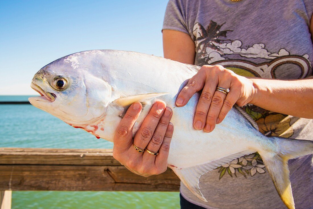 A woman holding a freshly caught pompano (jack fish) (Texas, USA)