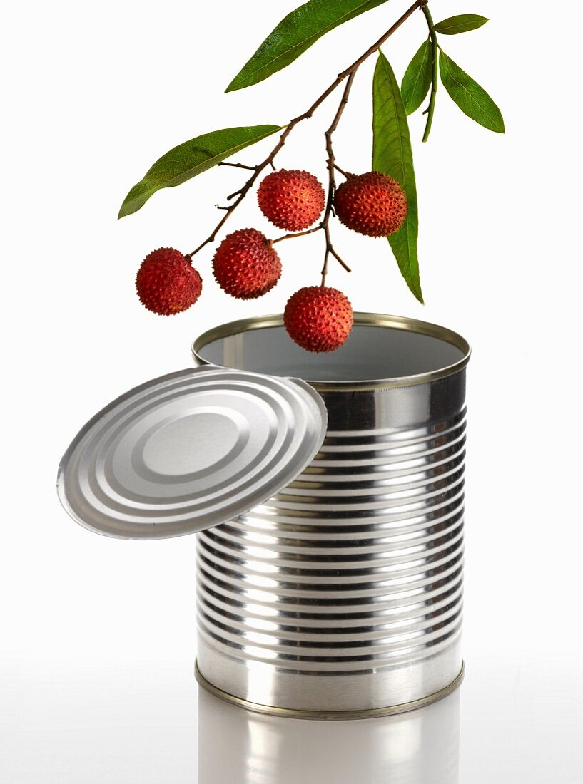 A lychee twig over an open can