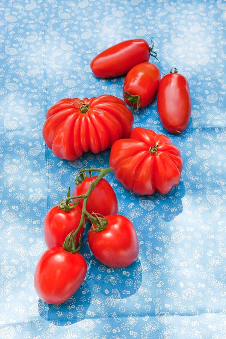 Plum tomatoes, beef tomatoes and vine tomatoes on a blue cloth outdoors
