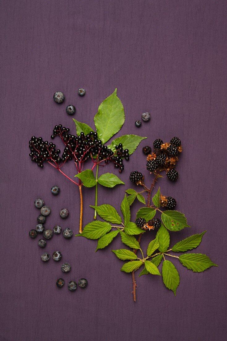 Blueberries, elderberries and blackberries with stalks and leaves
