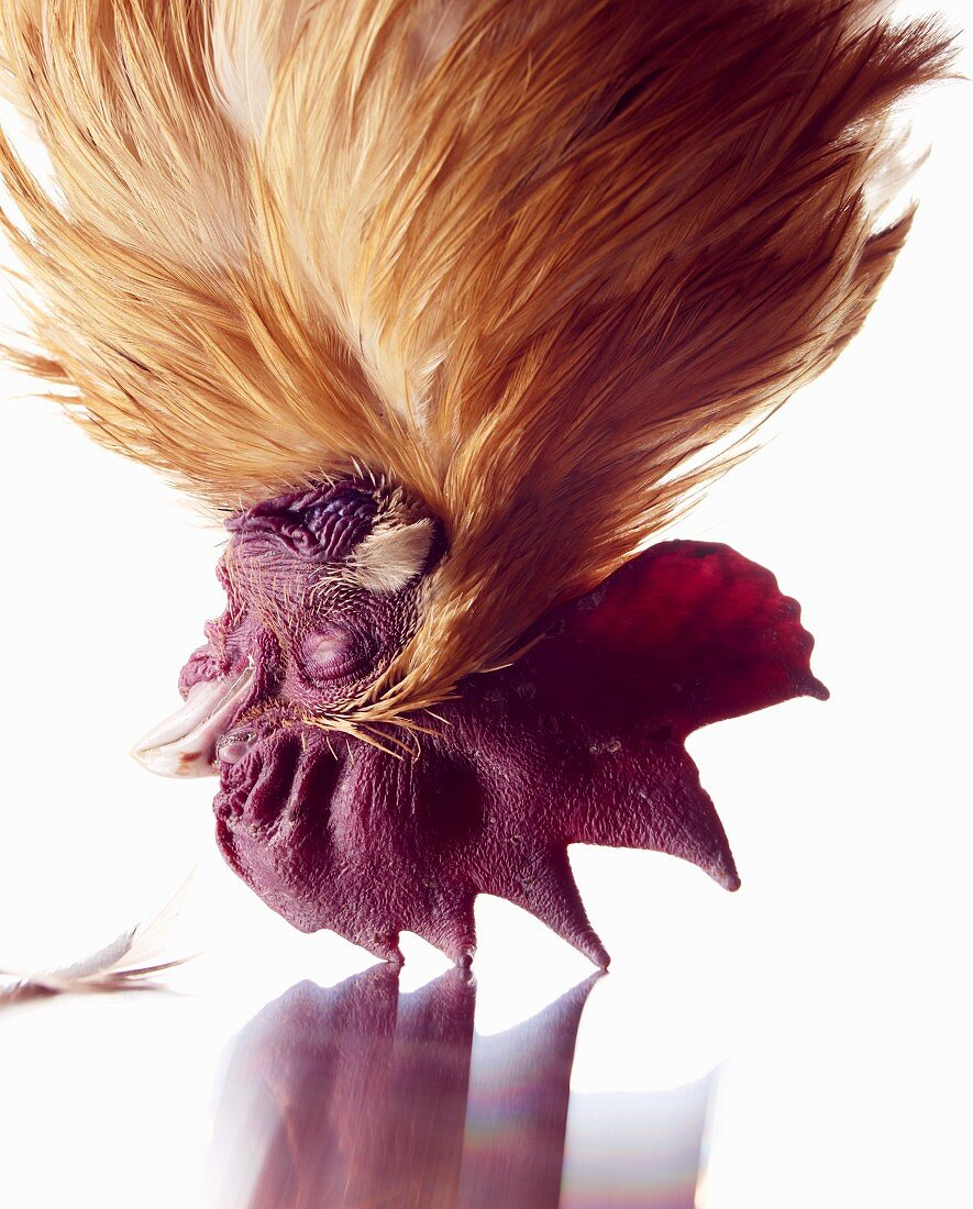 The head of a chicken (close-up)